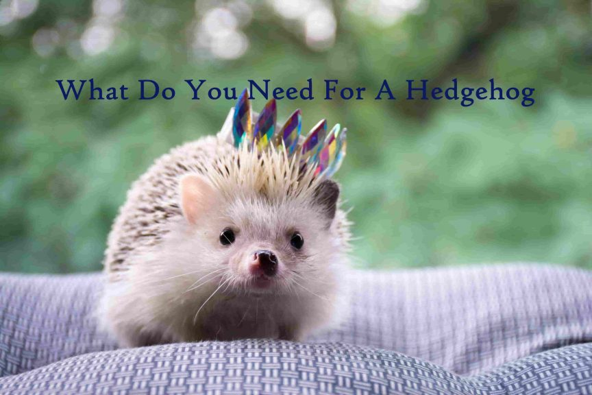 What Do You Need For A Hedgehog