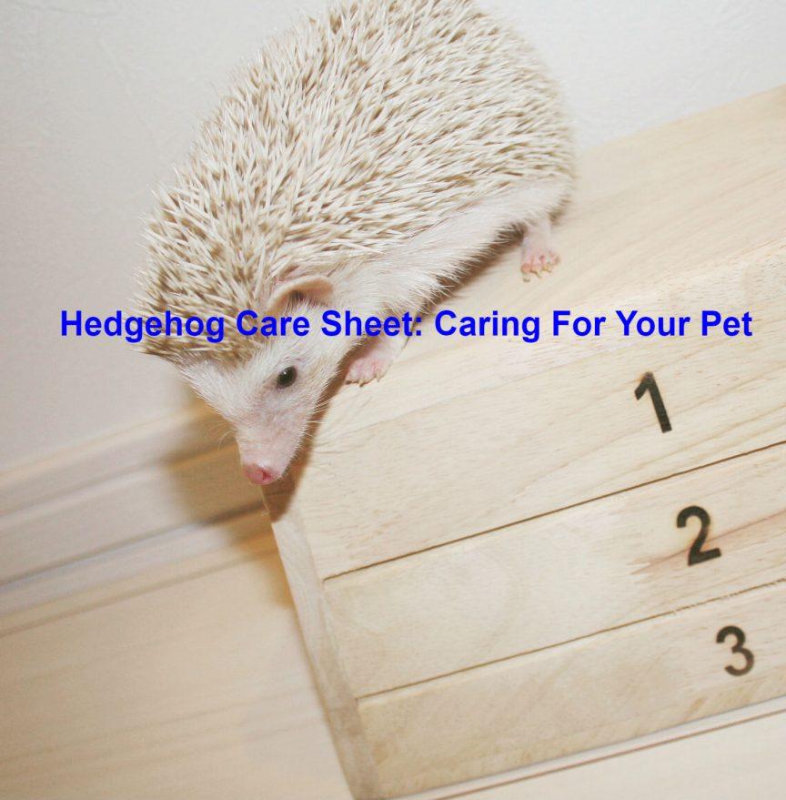 Hedgehog Care Sheet