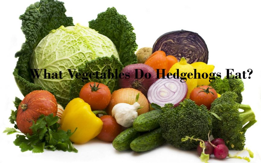 What Vegetables Do Hedgehogs Eat?