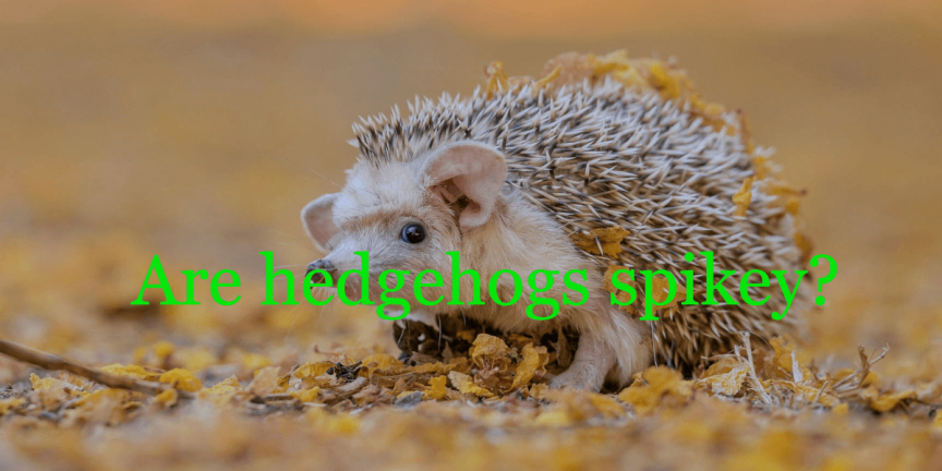 Are hedgehogs spikey