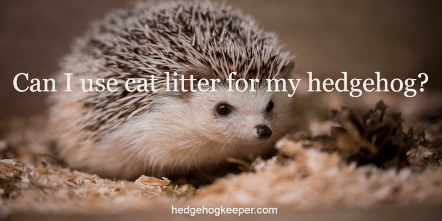 Can I use cat litter for my hedgehog