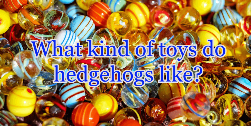 What kind of toys do hedgehogs like