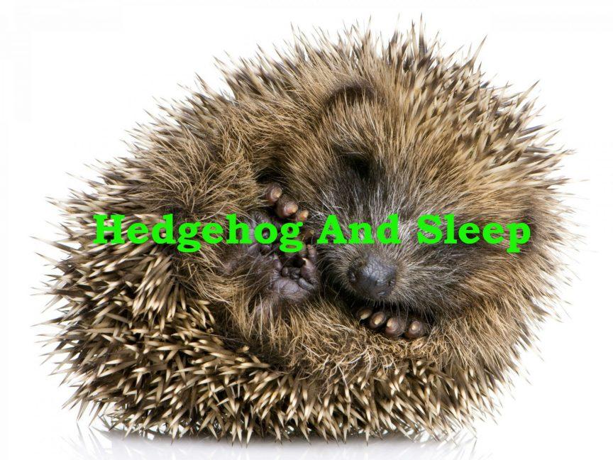 How long do hedgehogs sleep